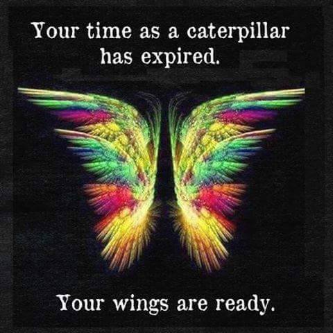 butterly-wings